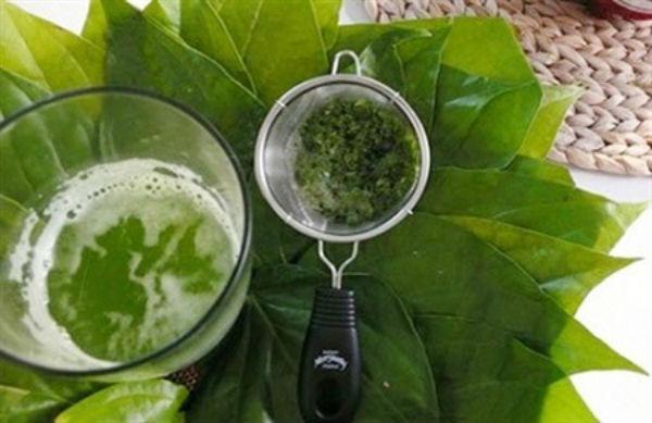 Dùng lá trầu không trị đau dạ dày có thể dùng trực tiếp hoặc pha như một vị trà đều đem lại hiệu quả