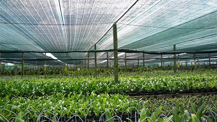 Nhà lưới trồng lan – mô hình mang hiệu quả kinh tế cao