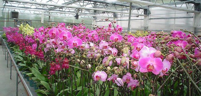 Xây dựng hệ thống nhà lưới trồng lan cần quan tâm những gì?
