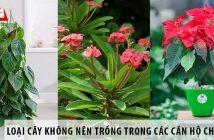 Những loại cây không nên trồng trong các căn hộ chung cư