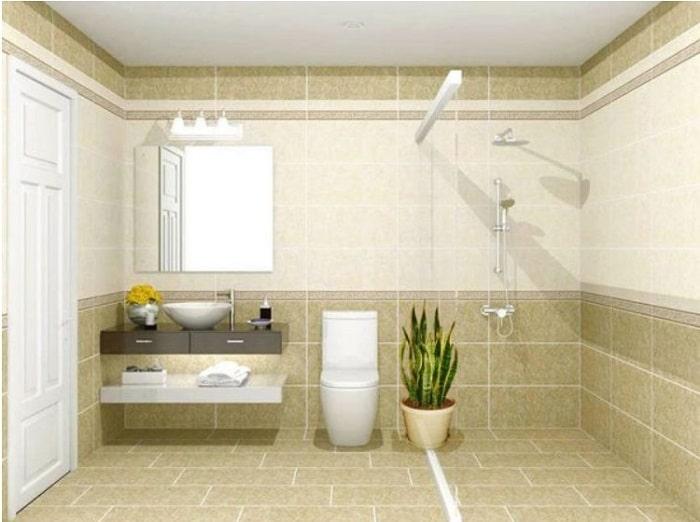 Đặt cây lưỡi hổ trong nhà vệ sinh giúp thanh lọc không khí