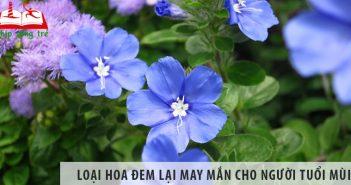 Loại hoa nào đem lại may mắn cho người tuổi Mùi?