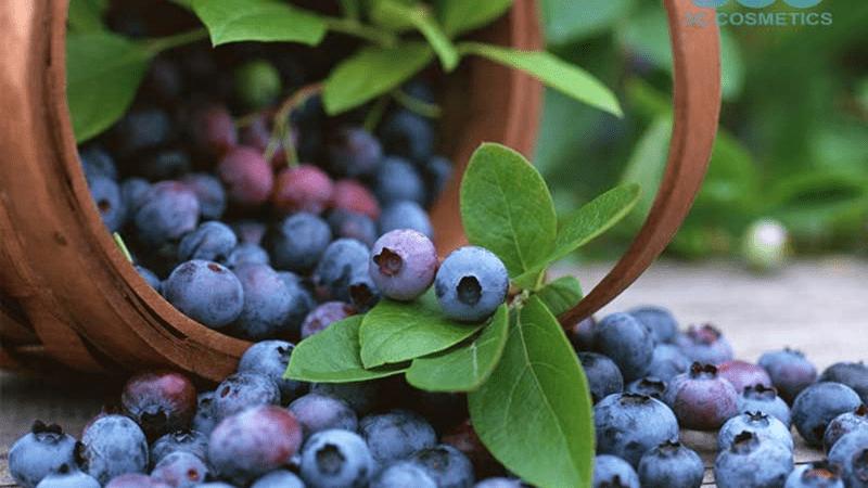 Bổ sung quả việt quất giàu vitamin A, C chống lão hóa da tuổi 40