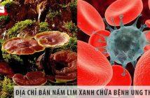 Địa chỉ bán nấm lim xanh chữa bệnh ung thư máu uy tín